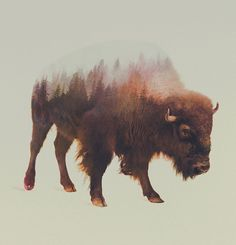 "supersonicart: "" Andreas Lie's Double Exposure Animal/Nature Photographs. Norwegian visual artist Andreas Lie uses double exposure photography to beautifully display nature at it's finest through the. Art And Illustration, Illustration Animals, Portraits En Double Exposition, Canvas Art, Canvas Prints, Art Prints, Canvas Size, Animal Prints, Bison Tattoo"