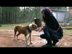 Tania Leads the Rescue to Save Ten Dogs | Pit Bulls and Parolees (+playl...