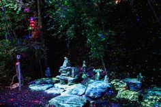 'Foresta Lumina' Enchanted Forest Light Show In Quebec