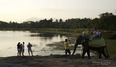 tourists enjoying an elephant back rides, Habarana