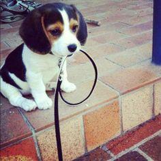 C'est quand tu veux pour la balade ! #chien #animaux #cute