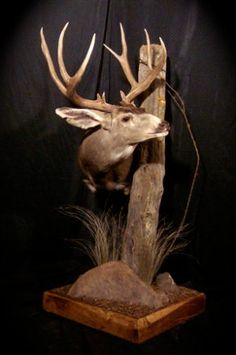 Deer Hunting Decor, Deer Head Decor, Taxidermy Decor, Taxidermy Display, Deer Mount Decor, Deer Shoulder Mount, Hunters Cabin, Deer Wallpaper, Deer Antlers
