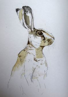 Hare - Make drawings detailed, then add some color, but not completely painted. Love.