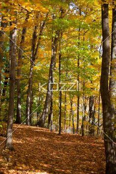 forest and autumn trees. - Image of forest and autumn trees.