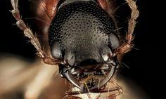 39 fascinants arthropodes observés à travers les plans les plus détaillés que vous n'ayez jamais vu