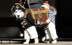 This has to be the best looking outfit for a dog ever! :-)