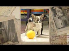 Cahorros chihuahueños HGG - YouTube