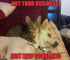 Loose lips sink ships... | NOT YOUR BUSINESS JUST KEEP SCROLLING | image tagged in cat,dog  knife,memes,cats,funny animals,animals | made w/ Imgflip meme maker
