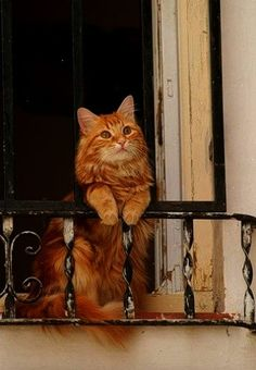 Chat Cat....and various #information about #cats...www.thecatniptimes.com