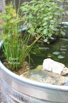 Pond Plants For The Stock Tank Pond Via Beanandbee.com