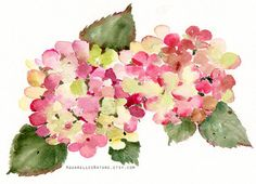 Pink hydrangeas in autumn, Original watercolor painting, Floral art, late summer flowers, hydrangeas, autumn season, autumnal hydrangeas