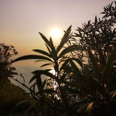 #sunrise #sun #sky #sea #mornig Sunrise, Sky Sea, Celestial, Plants, Photography, Outdoor, Outdoors, Photograph, Sunrises