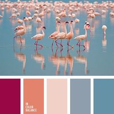 Image result for beautiful color combinations