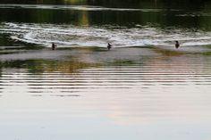 2015-05-21: quack attack