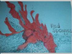 Red Sponges