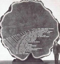 Funny pictures about The Amazing Life Of A Tree. Oh, and cool pics about The Amazing Life Of A Tree. Also, The Amazing Life Of A Tree photos. Second Crusade, Alfred The Great, In Natura, Interesting History, Interesting Photos, Interesting Stories, Interesting Facts, Looks Cool, World History