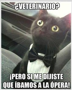 veterinario-pero-si-me-dijiste-que-ibamos-a-la-opera-neko-gato-con-traje.jpg (581×720)