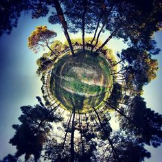 Forest near the beach!!! #tinyplanet