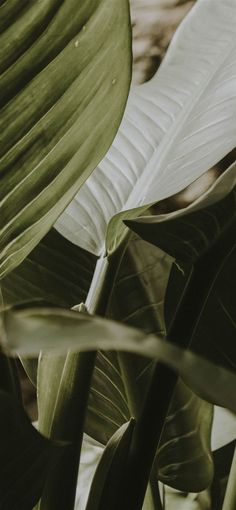 Leaves Wallpaper Iphone, Plant Wallpaper, Green Wallpaper, Aesthetic Backgrounds, Aesthetic Iphone Wallpaper, Aesthetic Wallpapers, Plant Aesthetic, Flower Aesthetic, Phone Backgrounds