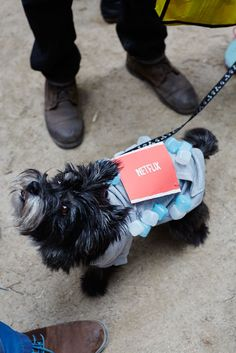 The 40+ Best Dog Costumes EVER  #refinery29  http://www.refinery29.com/2015/10/96371/new-york-dog-parade-pictures#slide-22  Everyone's favorite catchphrase, in dog form....