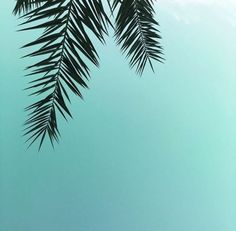 palmtrees and blue skies | www.Avon.com.au | www.Avon.co.nz | AvonAUSNZ / lifestyle / Style / hair / hairstyle / trends / beauty