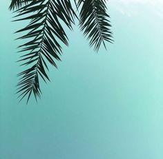 palmtrees and blue skies   www.Avon.com.au   www.Avon.co.nz   AvonAUSNZ / lifestyle / Style / hair / hairstyle / trends / beauty