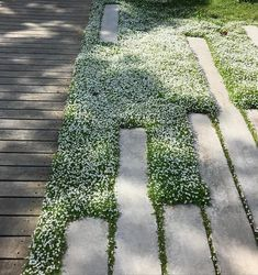Succulent Garden Pratia flowering beautifully at Northcote garden. Garden Pratia flowering beautifully at Northcote garden. Back Gardens, Small Gardens, Coastal Gardens, Outdoor Plants, Outdoor Gardens, Landscape Architecture, Landscape Design, Ancient Architecture, Garden Design Plans
