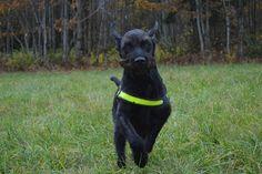 Gårdstunet Hundepensjonat: Dagens dose kule hunder! Har kost seg på luftejord...