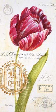 Парижский Тюльпан Арт Принт исполнителя Angela Staehling на Art.com