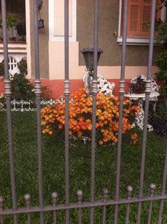 Uma graça esse jardim na Rua Itabaiana