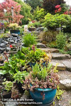 1203335 Stone steps framed by Sedum