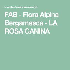 FAB - Flora Alpina Bergamasca - LA ROSA CANINA