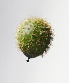 ballon de cactus