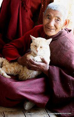 Elderly Tibetan Buddhist nun with pet cat in Leh, Jammu and Kashmir, India.
