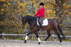 Gymnastizierung pur mit Schlangenlinie und -tour   Pferderevue   Ausbildung