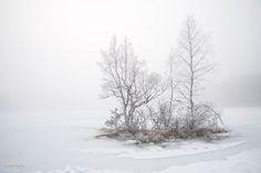 Whiteout landscape