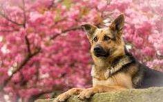kutya tavasz