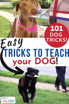Easy Tricks To Teach Your Dog! Here's a list of 101 dog tricks divided into 2 groups: Level 1 Difficulty - for beginners and dogs that don't know very many tricks yet. Level 2 Difficulty - for more advanced dogs. Cool Dog Tricks, Teach Dog Tricks, Easy Tricks, Tricks For Dogs, Dog Organization, Dog Commands, Dog List, Dog Games, Best Dog Training