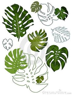 set-philodendron-leaves-9000815.jpg (684×900)