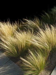 Nassella tenuissima (Mexican Feather Grass)--drought-tolerant, deer-resistant, will take full sun to part-shade. Landscaping Plants, Front Yard Landscaping, Drought Tolerant Grass, Mexican Feather Grass, No Grass Backyard, Xeriscaping, 139, Garden Studio, Gardens