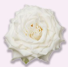 Affordable rose for garden-style weddings! Price Signs, Mothers Day Flowers, Garden Styles, Create Yourself, Icing, Roses, Bloom, Level 3, Treats