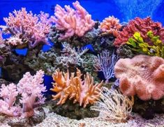Climate Change Documentary, Coral Reef Pictures, Aquarium Backgrounds, Live Coral, Underwater Photography, Landscape Photography, Underwater Photos, Film Photography, Street Photography