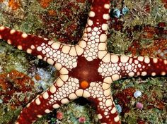 Photography Of Strange Patterns In Nature - Sea creatures 1