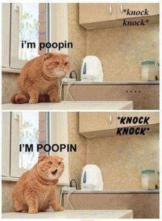 Poopin'