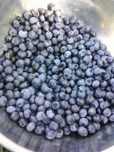 Our harvest while blueberry picking this past summer.