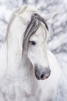 Un caballo de las nieves