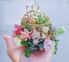 @charmingsucculentsのInstagram写真をチェック • いいね!5,401件
