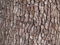 Bark texture Tree Bark, City Photo, Texture, Image, Art Ideas, Trees, Google, Wood Trunk, Adrenal Cortex