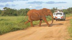 tsavo est, 2days safari