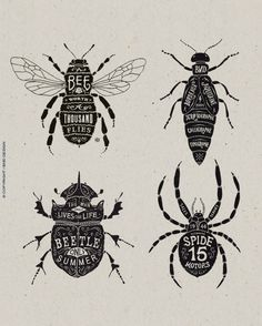 Selected Illustrations- These insect illustrations look amazing by BMD